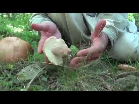 Trattamento laser di un fungo di unghie in Maryino