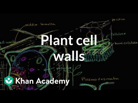 Plant cell walls (video) | Khan Academy