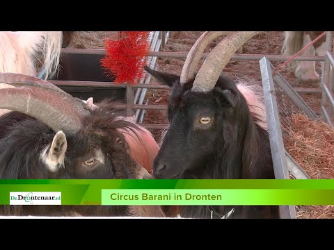 VIDEO | Circus Barani is neergestreken aan de Havenweg in Dronten