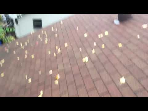Looking at an older 3-tab roof that is need of some work