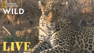 Safari Live - Day 220 | Nat Geo Wild