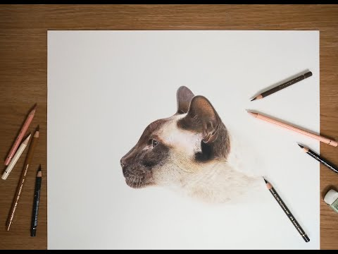 Thumbnail of Drawing a Siamese Cat - 2 Minute Timelapse