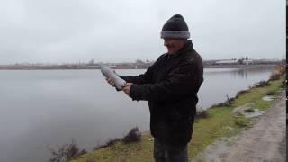 Пальба по чайкам в Назарбеке
