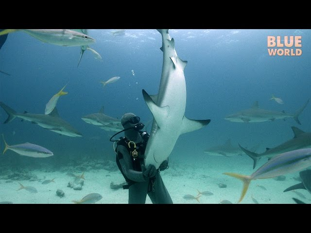 Shark Tonic Immobility | JONATHAN BIRD'S BLUE WORLD