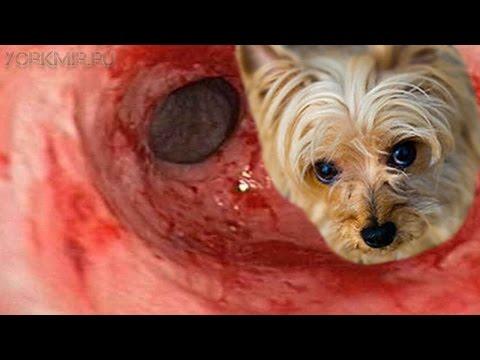 Гастрит у собак | Симптомы | Лечение | Диета.