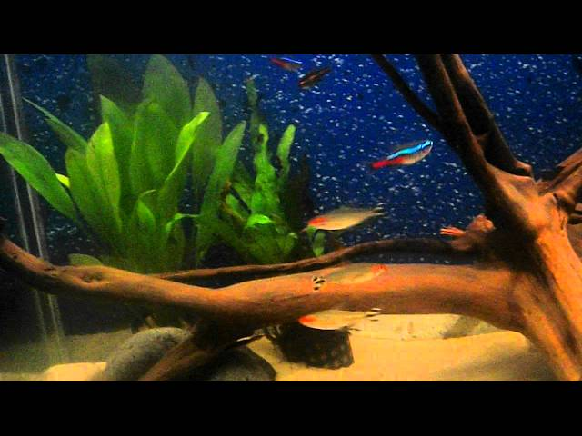 22nd September tropical tank update now with Leopard Corydoras Catfish