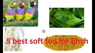 5 best soft foods for finches