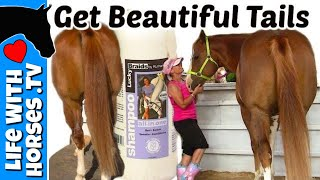 9 Tips To A More Beautiful Horse Tail | Horse Tail Care | Life With Horses TV