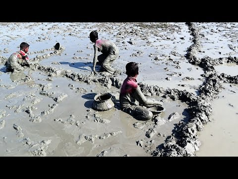 Little Boy Catching Fish in muddy water | Unique Hand Fishing