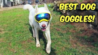Huskies Trying World's Best Dog Goggles for the First Time! (Funny Dogs)
