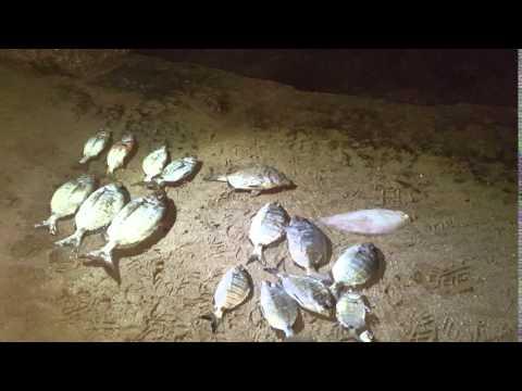 Comprare il cercatore di profondità sonico per risposte da pesca e i prezzi