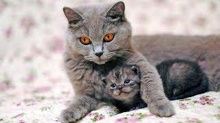Открыть питомник для собак и кошек / Бизнес идея для любителей животных