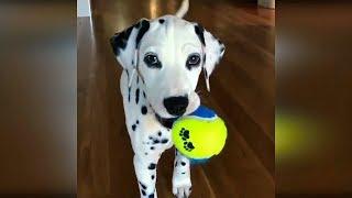Лучшие приколы с животными 2019 #15 Самые смешные животные 2019 Видео про котов и собак февраль 2019