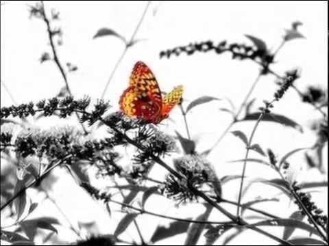 "Глюкоза  ""Бабочки в моем животе""..."