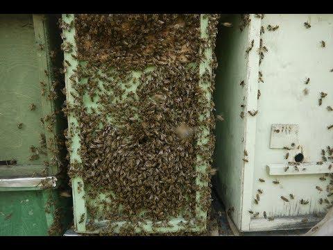 Ленивое роеловство. Как поймать пчелиный рой лежа на диване. Чертеж ловушки для пчел в описании