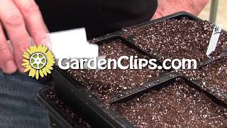 Starting Seeds Indoors - Part 1 - Why and when to start seeds for maximum growth and veggie yield
