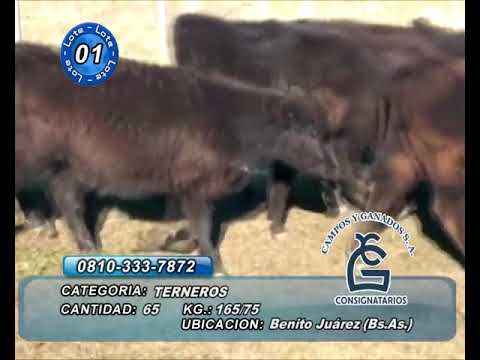 Lote Machos - Bto Juárez