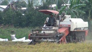 57% diện tích trồng lúa tại đồng bằng sông Cửu Long được cấp xác nhận
