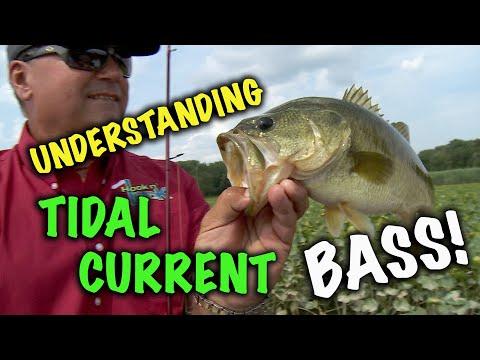 Understanding Tidal Current Bass!