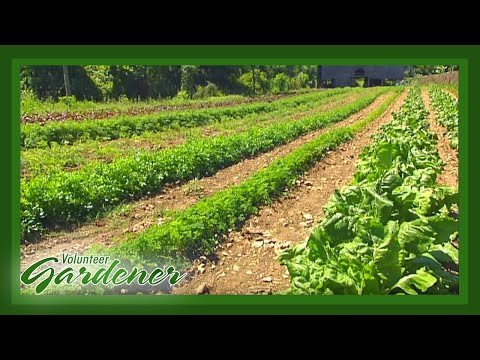 Organic Garden Knowledge Through Trial and Error