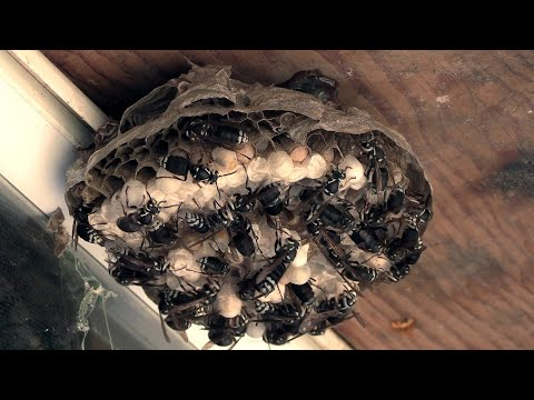WOW: Dude Took Care Of Wasp Problem Fast!