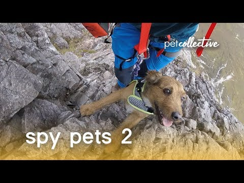 Spy Pets 2   The Pet Collective
