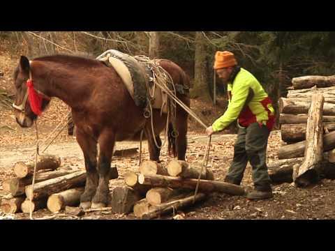 Verità di attivatore di cavallo o mito