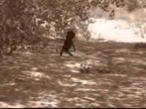 Alien Caught on Tape Española New Mexico