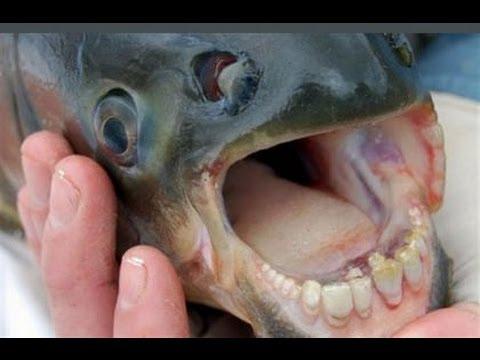 Che trattare piccoli pesci vermi