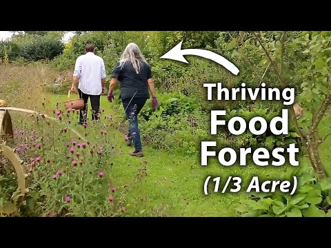 25 Year Old No Dig Permaculture Garden