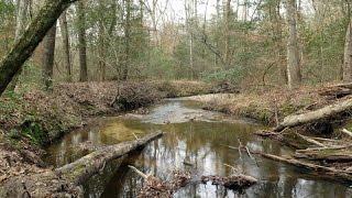 Campbell Creek, Lanier Falls, Raven Rock State Park, NC