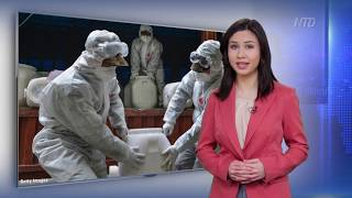China Funeral Homes Overloaded Amid Virus | NTDTV