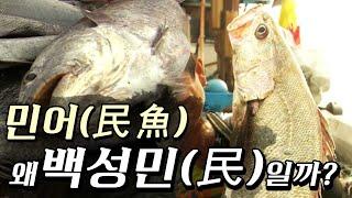 [특집다큐] 민어(民魚), 왜 백성민(民)일까?(2010년,목포MBC)