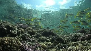 Ocean Conference – first step for governments to commit to save oceans by 2030
