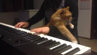 Смотреть онлайн Кот хочет ласки от своей хозяйки