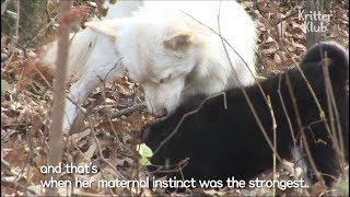 Dog Hides Her Puppy From Fear of Adoption | Kritter Klub