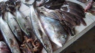preview picture of video 'Kribi et les poissons du débarcadère au Cameroun'