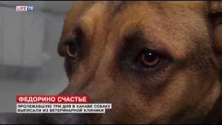 В продолжение истории, репортаж LifeNews 78 о собаке Федоре, в день выписки!