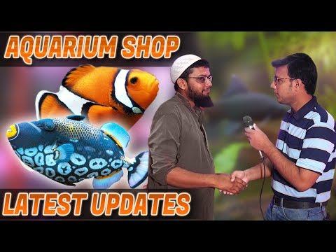 Aquarium Fish Latest Updates Aquarium Shop In (Urdu/Hindi)