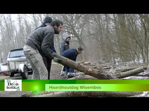 VIDEO | Haardhout Staatsbosbeheer in het Wisentbos verrassend snel uitverkocht