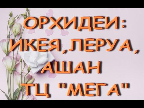 "ОРХИДЕИ:Икея,ЛЕРУА,Ашан(ТЦ ""МЕГА"") на 11.02.21,Самара."