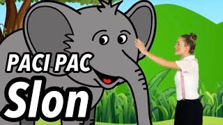 PACI PAC - Slon (z DVD PACI PAC 2)