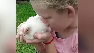Приколы с животными котики собачки смешно до слез мимими