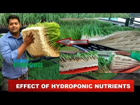 Ashwin Sawant | Importance of Hydroponic Nutrients