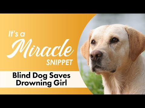 Blind Dog Saves Drowning Girl - It's A Miracle - 6033