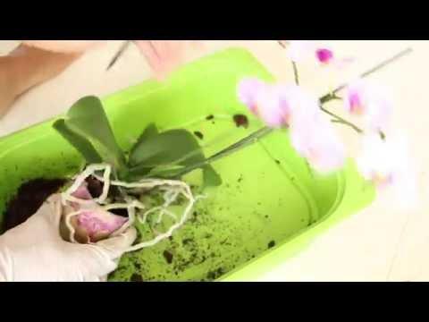 Les préparations modernes des helminthes pour les enfants