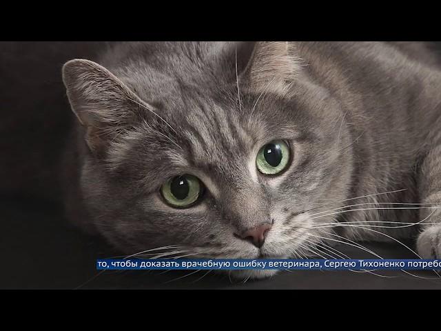 Суд оштрафовал ангарского ветеринара за смерть животного