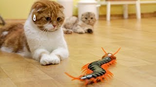 Cats' Reaction to a Giant Centipede [SURI&NOEL CAT's STORY]