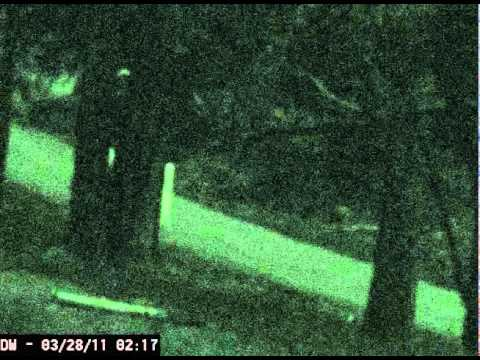 Nightcrawler Creature Near Yosemite National Park