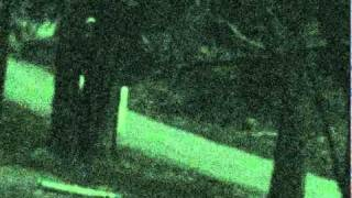 Strange Alien Stick-like creatures caught on security camera above Fresno in Yosemite National Park